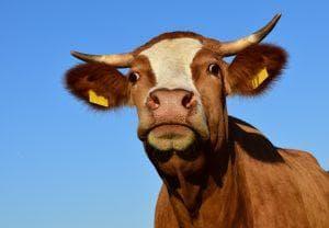 Los 280 caracteres de Twitter van a permitir que veamos tonterías más gordas que una vaca embarazada